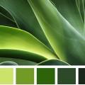 Αποχρώσεις Πράσινου -Μέντας :Ιδέες - Προτάσεις για Σχεδιασμό , Έμπνευση με την εγγυημένη ποιότητα ΠΕΤΡΟΧΕΙΛΟΣ.