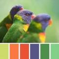 Αποχρώσεις MultiColor Πολύχρωμο : Ιδέες - Προτάσεις για Σχεδιασμό , Έμπνευση με την εγγυημένη ποιότητα ΠΕΤΡΟΧΕΙΛΟΣ.